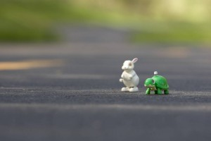 The tortoise and the hare retold in terms of SEO!