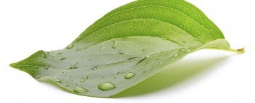 Tips for making your website's design more environmentally friendly
